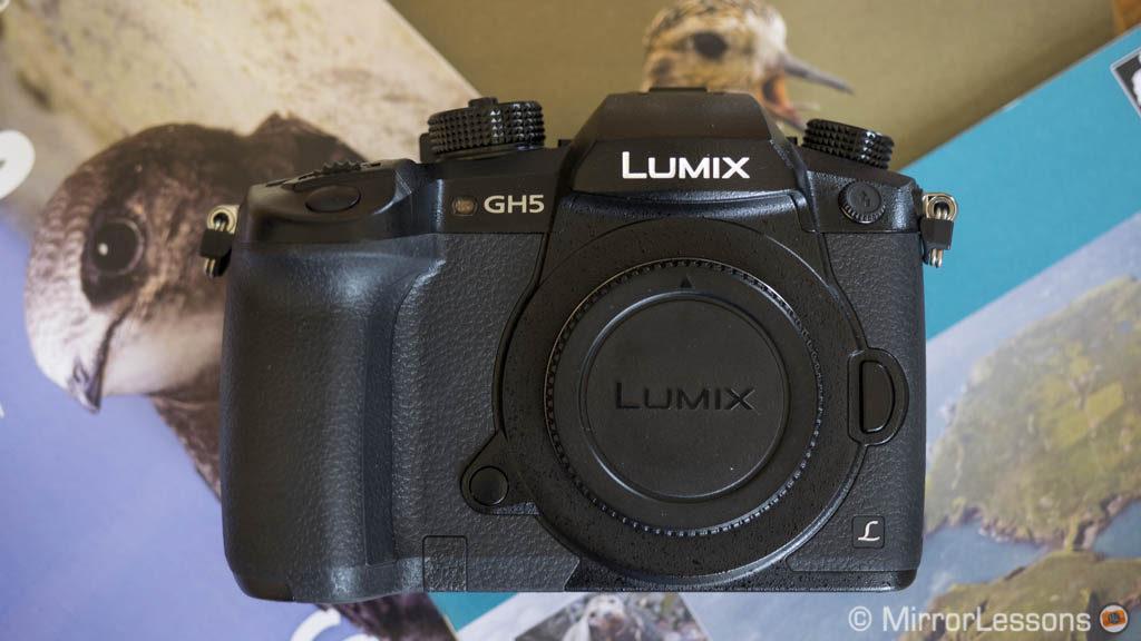 best mirrorless camera wildlife birds photography