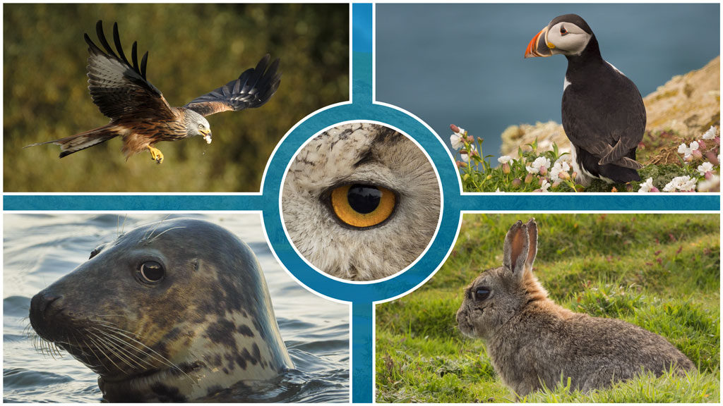 cover image with a photo collage various animals captured with various cameras