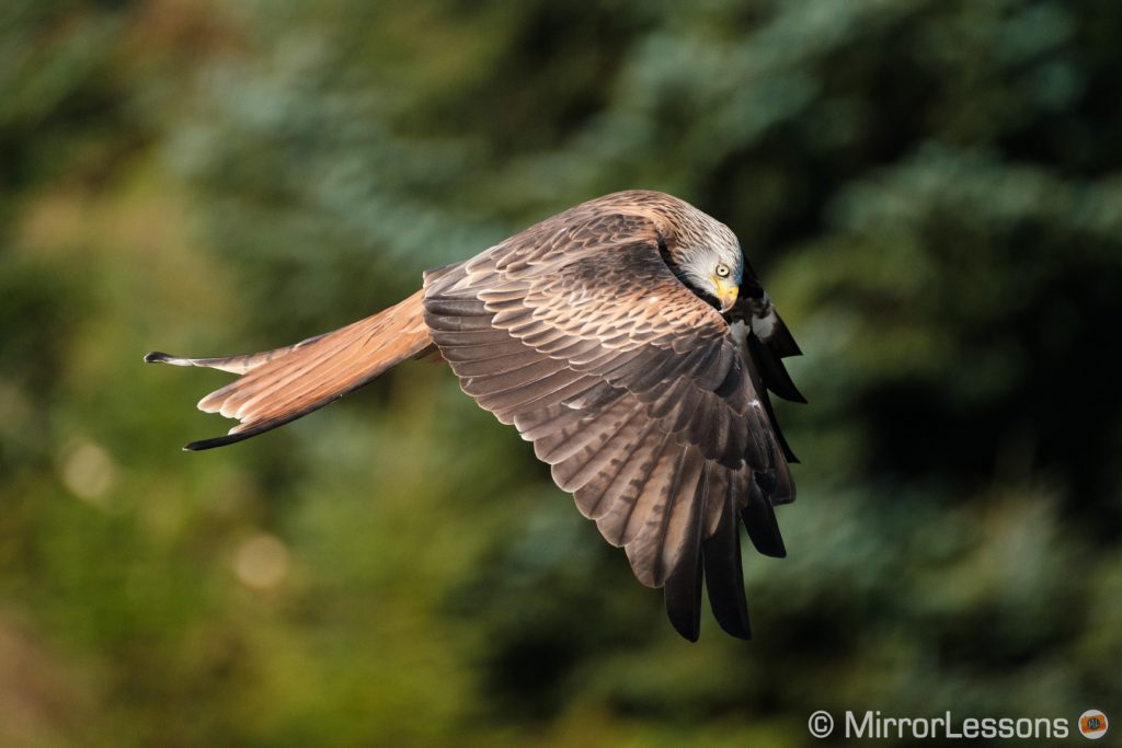 another red kite flying against trees