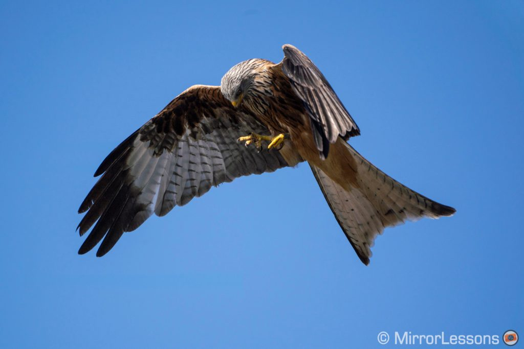 Red kite against the blue sky