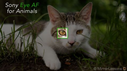 How to use Eye AF for animals on your Sony camera