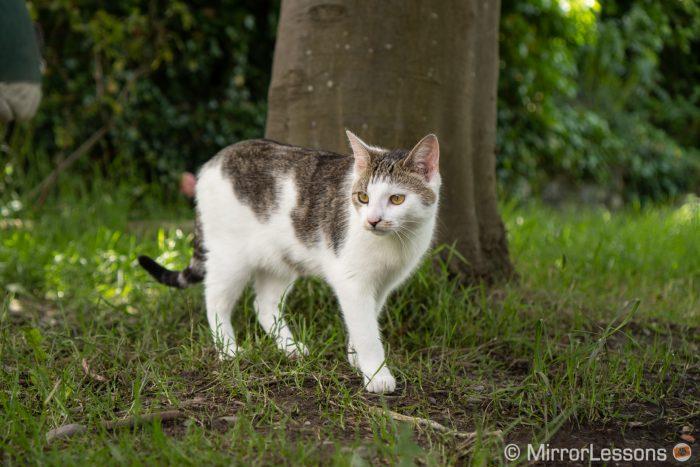 cat walking in a garden