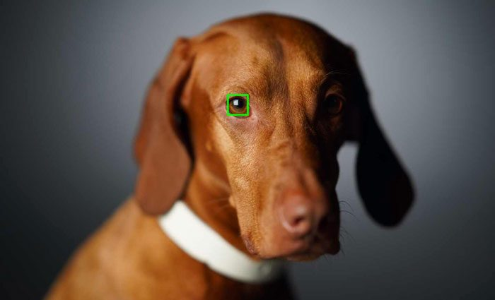 Eye detection focusing on the eye of a dog