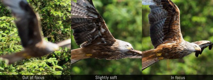 Out of focus vs slightly soft vs in focus examples featuring a kite