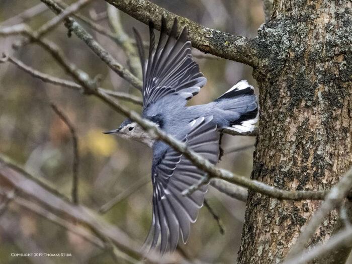 A bird flying through the trees
