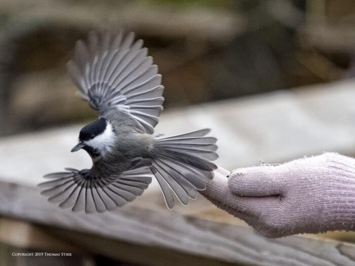 olympus omd em1x bird photography