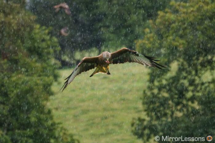 sony a7r ii wildlife image