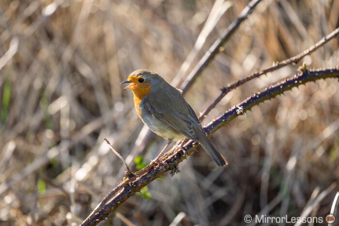 sony a7 iii bird image