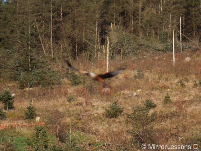 A red kite out of focus