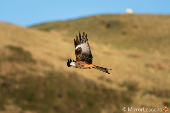 red kite flying with hill in the background