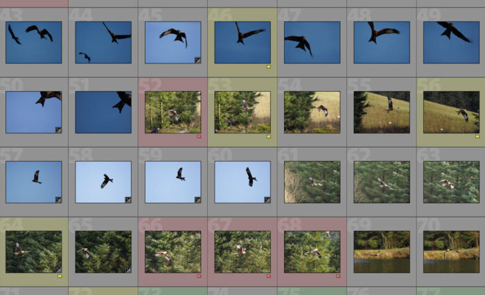 Sequence of red kite shots