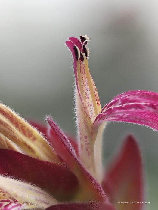 A pink flower petal