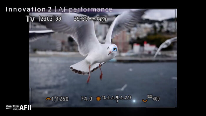 eos r5 eye detection for birds