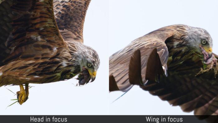 head in focus versus wing in focus