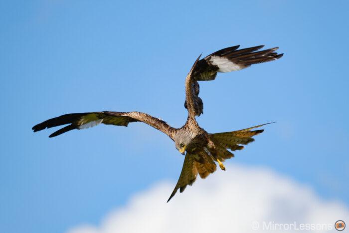 fujifilm xt4 bird in flight