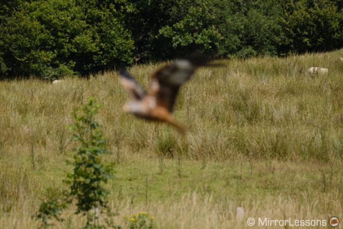 fuji xt4 bird in flight