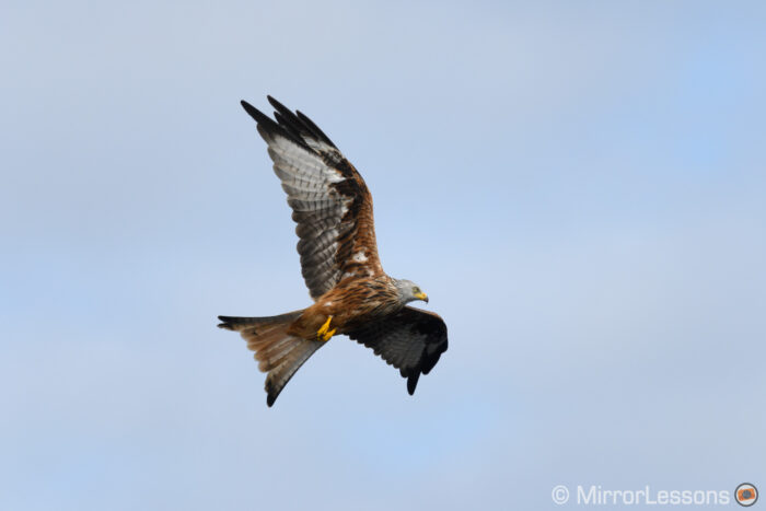 red kite flying against partially covered sky