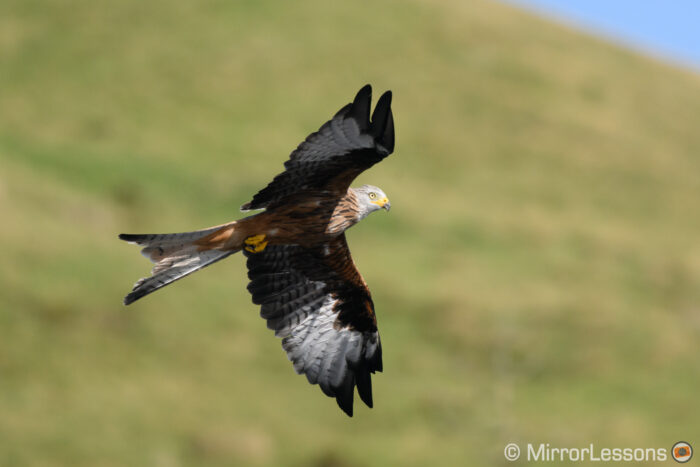 red kite flying with green hill in the background