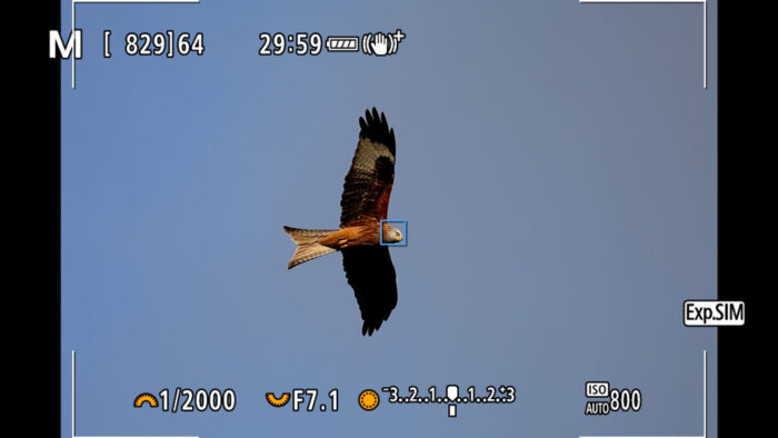screenshot of the Canon EOS R6 Live View showing the Animal Detection mode focusing on the head of a red kite flying against the blue sky