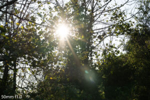 image of the sunlight behind trees and the flare produced by the 50mm f1
