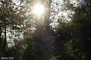 image of the sunlight behind trees and the flare produced by the 50mm f2