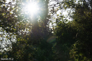 image of the sunlight behind trees and the flare produced by the 56mm f1.2