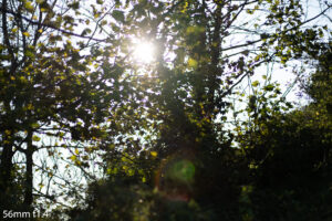 image of the sunlight behind trees and the flare produced by the 56mm f1.4