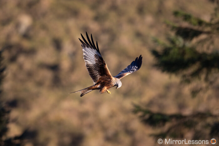 red kite flying against a hill