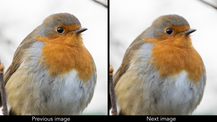 two images of a robin side by side, the one on the left is in focus, and the one on the right is out of focus