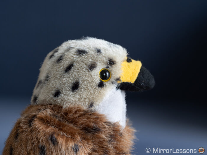 close-up of the red kite stuffed toy
