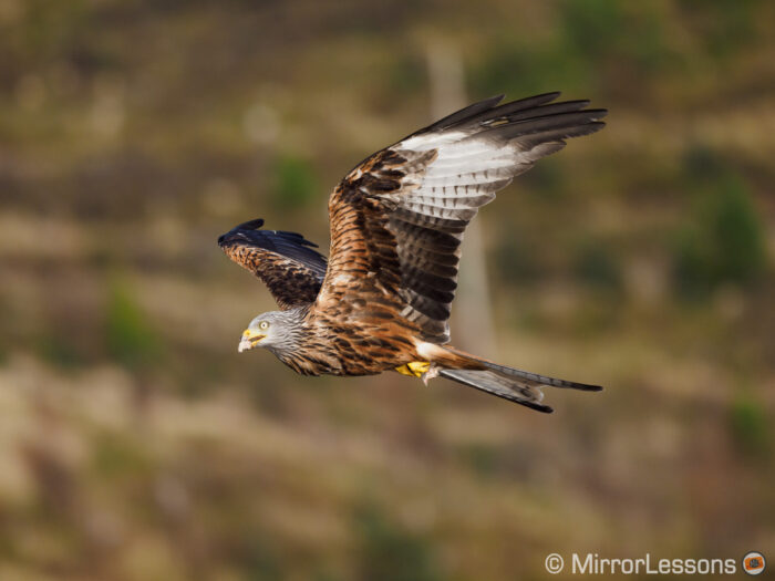 red kite flying against a brown hill