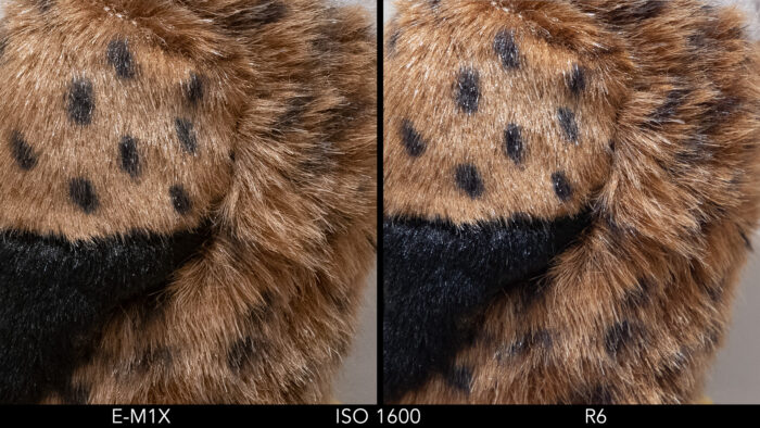 side by side images showing the difference in quality between the Olympus E-M1X and Canon R6 at ISO 1600
