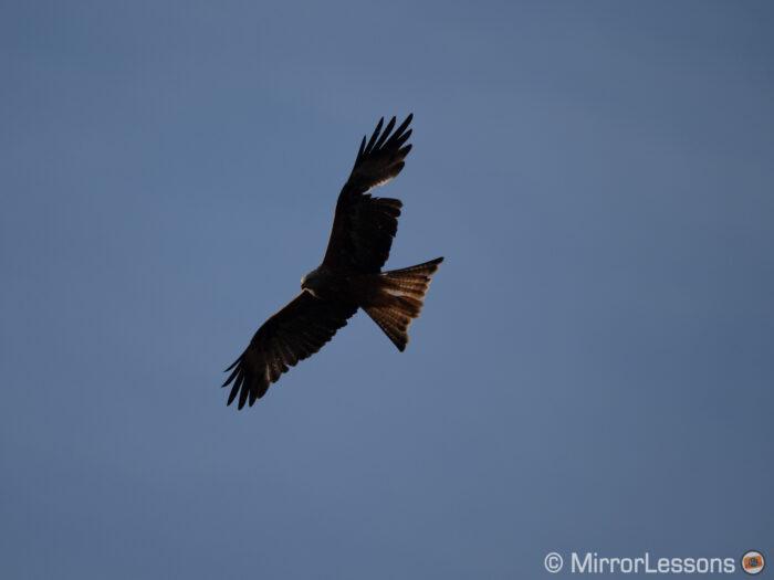 red kite flying against the blue sky