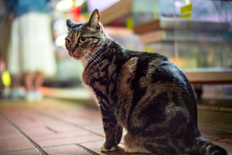 cat in the streets at night