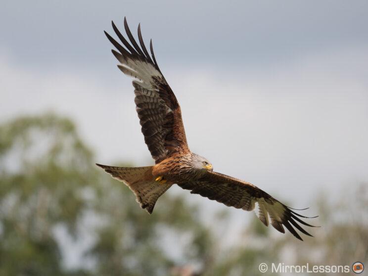 red kite flying against trees