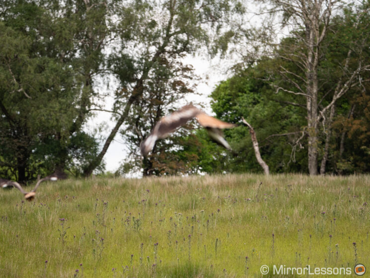 red kite completely out of focus, and trees in focus in the background