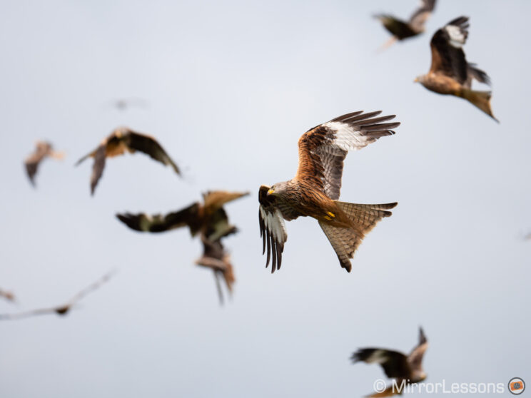 red kite flying up in the sky, with various kites behind him and out of focus