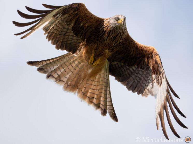 close-up of a red kite in the sky