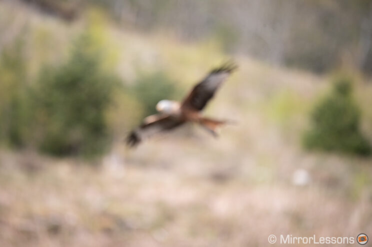 red kite flying against hill and trees, image completely out of focus