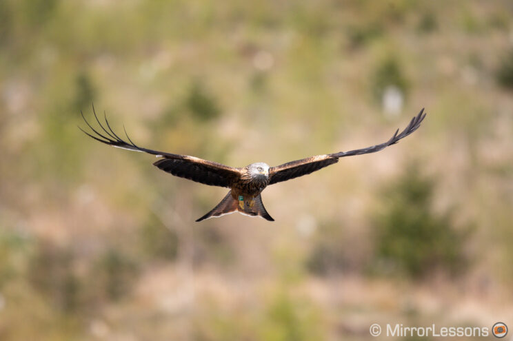 red kite flying against a green hill