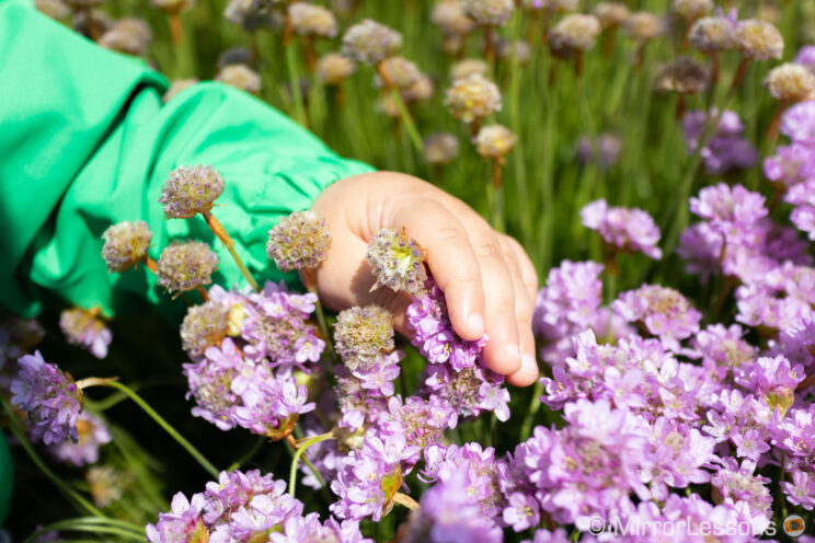 toddler hand touching flowers