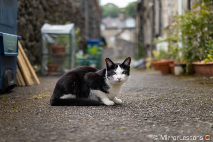 black and white cat standing in a small street