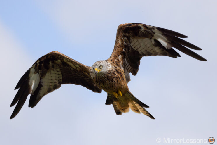 red kite flying up in the sky with light clouds