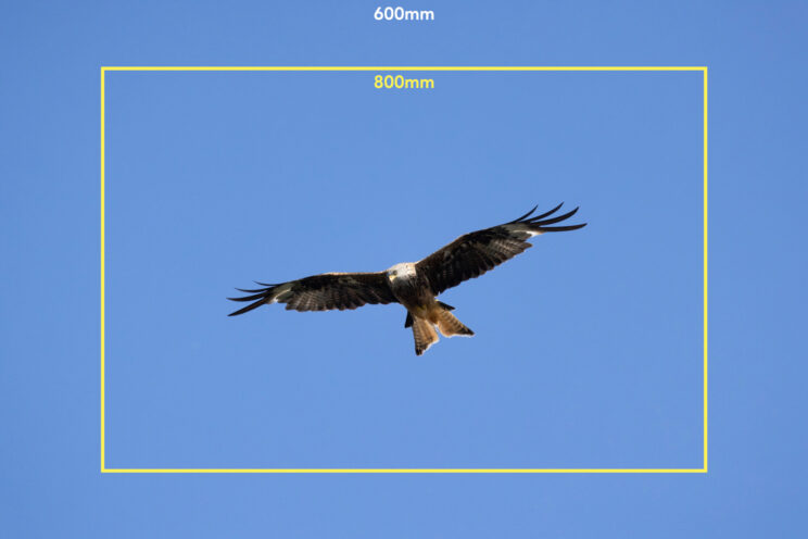 red kite flying in the blue sky, with bright yellow frame to show the field of view of the 800mm lens