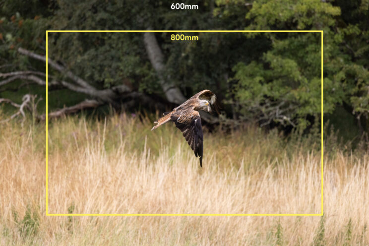 red kite flying in front of trees, with bright yellow frame to show the field of view of the 800mm lens