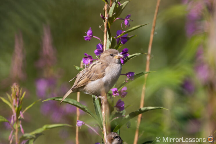 small bird perched on tall plants