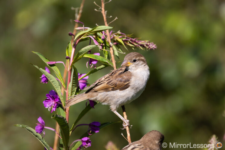small bird perched on a thin but tall plant