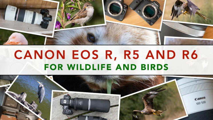 cover image with the title of the article and a collage of wildlife images in the background