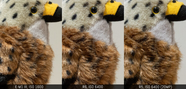 three way comparison with the three cameras, ISO 1600 on the E-M1 III vs ISO 6400 on the two canon (R5 downscaled to 20MP)