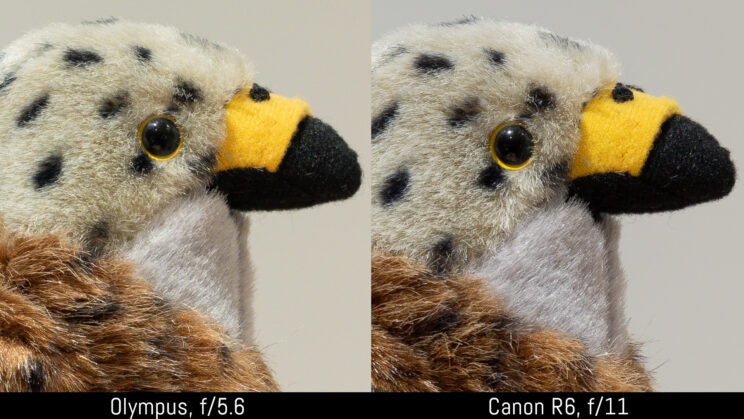 side by side crop of the stuffed toy image, showing sharpness at f5.6 and f11